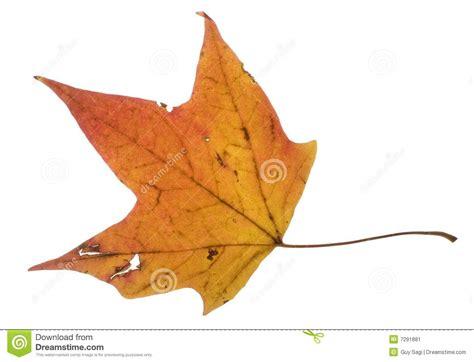 Orange Leaf Gift Card - orange leaf stock image image 7291881
