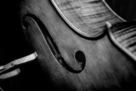 black white black and white violin photography www pixshark com