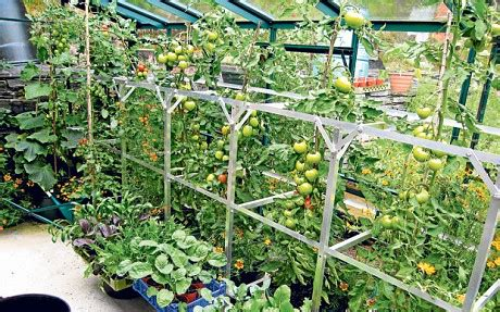cool small palnts to grow 15 most popular vegetables and fruits to grow in a green