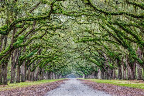 South Carolina Cleveland Fine Art Landscape South Carolina Landscape