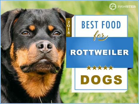 best food for a rottweiler best 6 foods to feed your and puppy rottweiler 2018