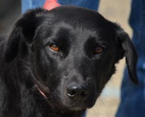 athens county shelter athens county shelter chauncey oh 740 593 5415 is an adoptable black