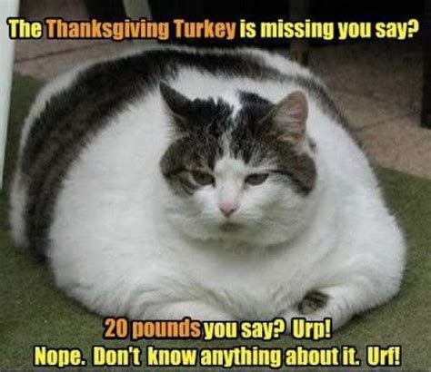 After Thanksgiving Meme - happy thanksgiving day images 2017 memes hd wallpapers