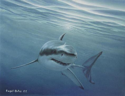 shark painting white shark painting by ortiz
