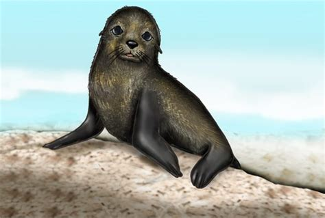 New Home Foundation by Fur Seal Illustration Australian Museum