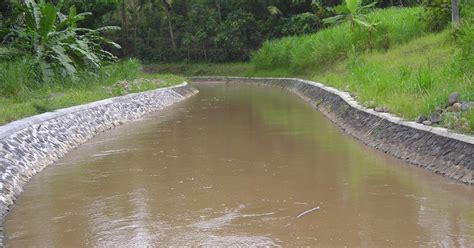 Benih Biji Bidara Upas bpp nanggulan pembukaan aliran irigasi kalibawang