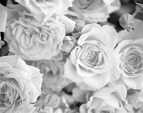 wallpaper grey roses grey rose petals wallpaper mural plasticbanners com