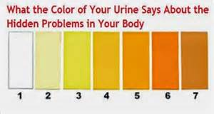 what gives blood its color the meaning of urine color