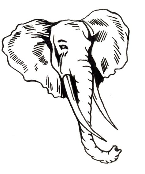 elephant tattoo clipart elephant drawings images cliparts co