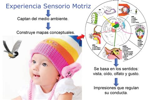 imagenes sensoriales definicion y ejemplos wikipedia procesos sensoriales perceptivos y deficiencia