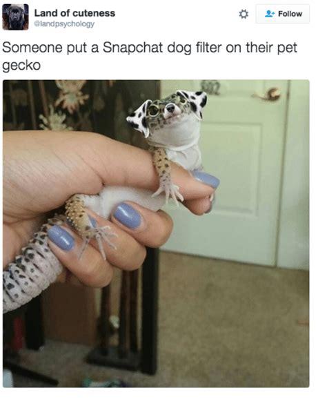 land  cuteness follow  put  snapchat dog filter