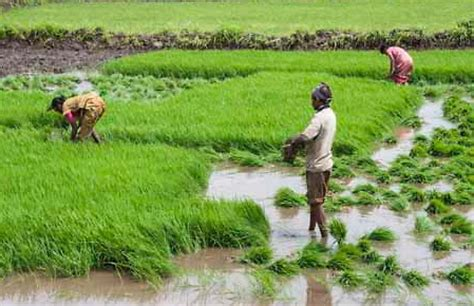 govt to fix minimum wage rs 350 for farm workers in c