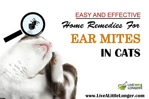 10 best home remedies for ear mites in cats
