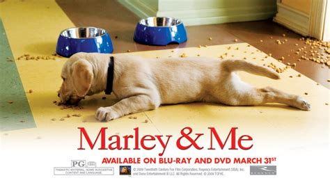marley and me marley and me images marley and me hd wallpaper and background photos 5315874