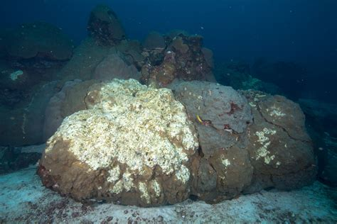 corals are dying in a part of the gulf of mexico and
