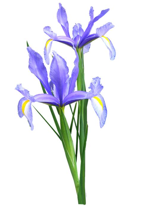 Bunch Of Flowers In A Vase Free Photo Iris Dutch Flowers Free Image On Pixabay