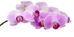 Different Types Of Purple types of purple flowers the different x3cb x3etypes x3c b x3e of