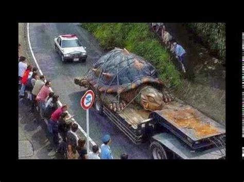film movie tersedih di dunia kura kura terbesar di dunia shock video youtube