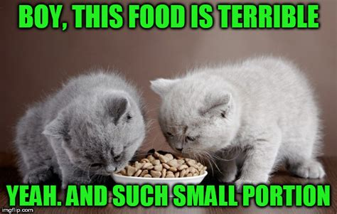 Cat Food Meme - image tagged in memes cats food imgflip