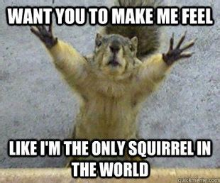 let me see you do the squirrel 8 best images about i love squirrels on pinterest cars