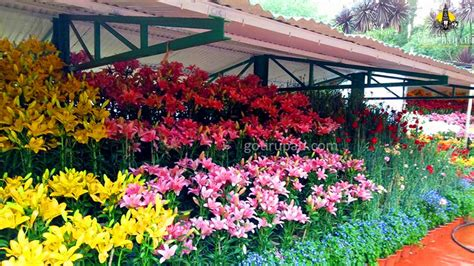 ooty botanical garden timings ticket cost opening and