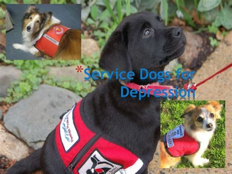 service dogs for depression service dogs