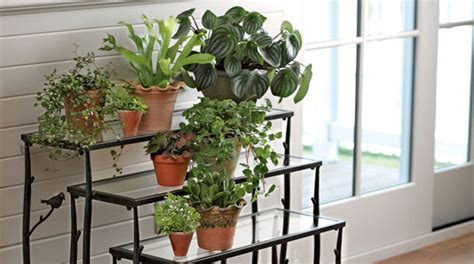 north window plants caring for indoor plants houseplants gardener s supply