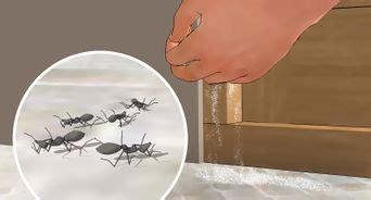 come uccidere le formiche volanti come liberarsi degli scarafaggi utilizzando il borace