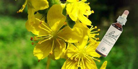 fiori di bach e menopausa fiori di bach e menopausa menopausa