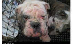 how many sets of do puppies get bill aimed at cracking on iowa puppy mills faces akc opposition