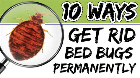 rid  bed bugs permanently    effective ways youtube
