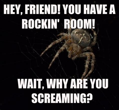Scary Spider Meme - 25 best ideas about spider meme on pinterest crazy cats