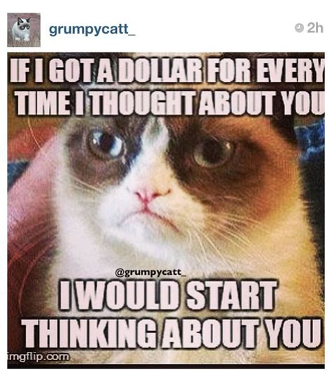 Thinking Cat Meme - 155 best images about grumpy cat on pinterest xmas