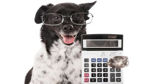 how much do cost for puppies how much does a cost budgeting guide for owners