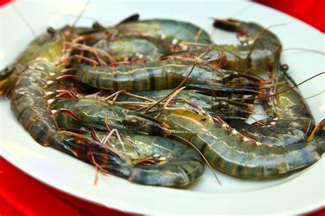 Steamboat Set Cedea 300g happy city steamboat restaurant buy 1 free 1 live tiger prawns kota damansara malaysia