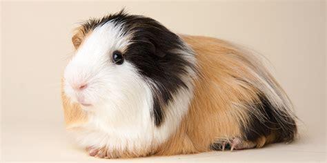adopt a small adopt a pet the toronto humane society