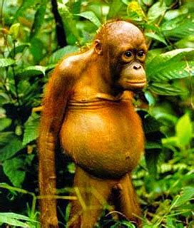 funny ugly animal pictures   funny collection world
