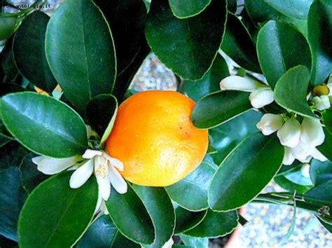 fiori e frutti foto frutti