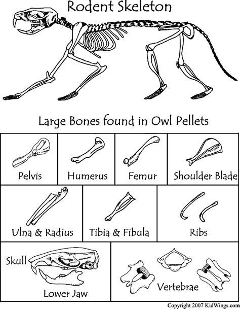 Owl Pellet Bone Chart Worksheet