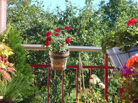 wohnfläche balkon balcone fiorito fare giardinaggio consigli per avere