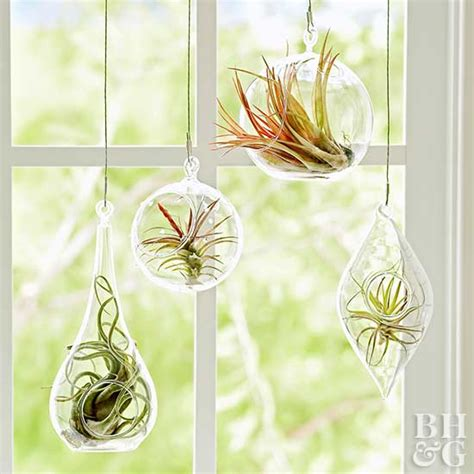 Plant Vase How To Grow And Care For Air Plants