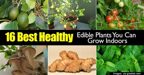 best plants to grow indoors 16 best healthy edible plants to grow indoors