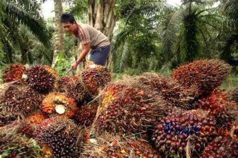 Minyak Cpo Kelapa Sawit harga minyak kelapa sawit cpo masih dibayangi sentimen negatif bisnis