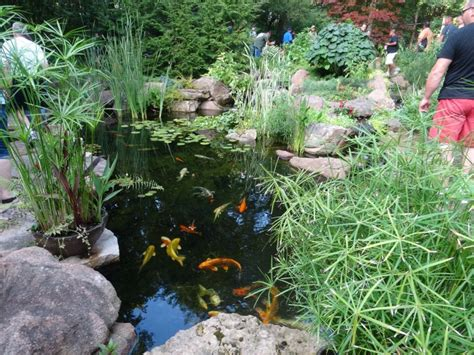 Aquascape Ponds by Ndh Aquascapes Fayetteville Nc Backyard Pond Ndh
