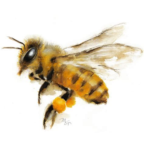 honey bee watercolor painting giclee print nature