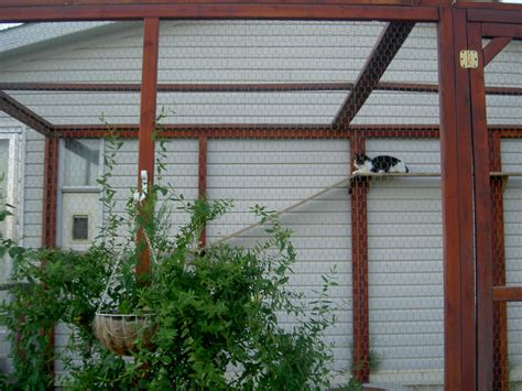 outdoor enclosures how to build an outdoor cat enclosure or catioteediddlydee