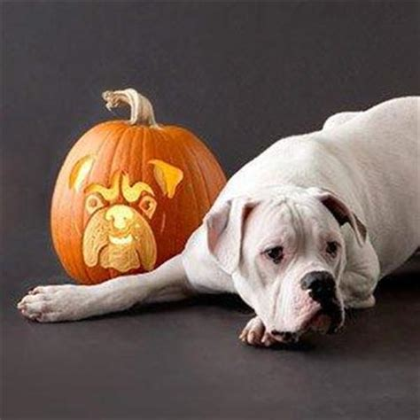 puppy pumpkin carving pumpkin carving pictures