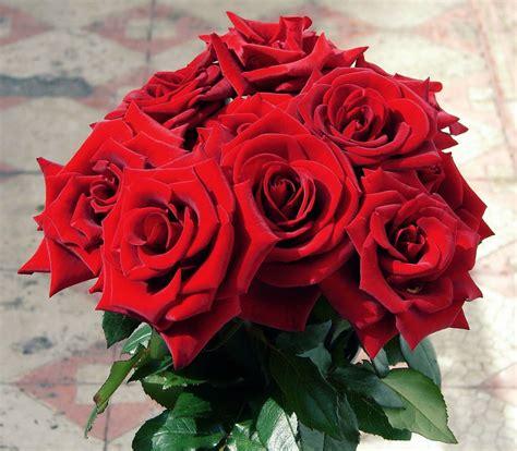 kumpulan gambar bunga mawar buat pacar tersayang