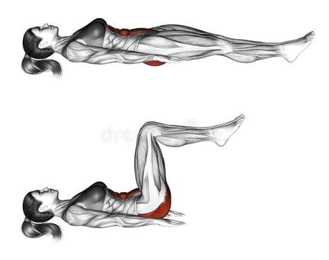 fitness exercising ab draw leg side stock illustration image 66588484