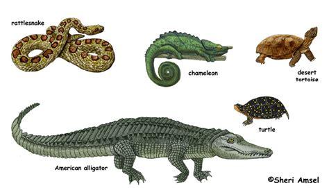 Imagenes De Animales Reptiles | animales reptiles imagenes imagui